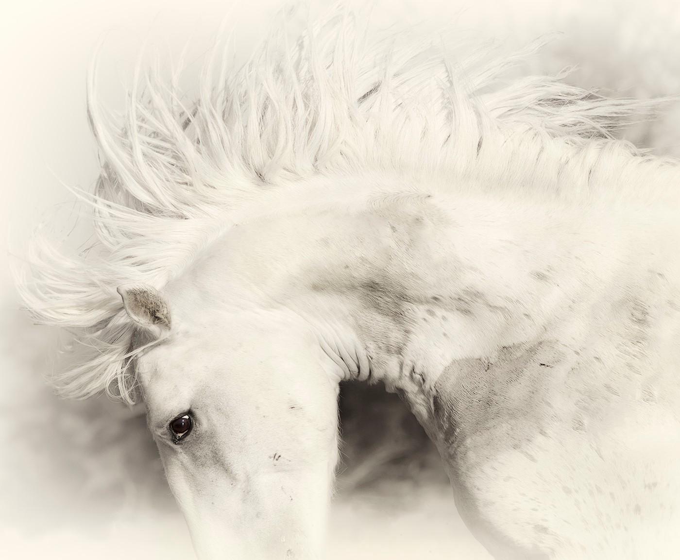 Stallion_Persona_4713_17x14_JMSilberman